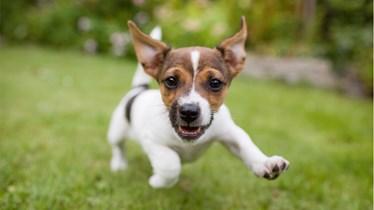 puppy_1455816747777_318889_ver1.0.jpg