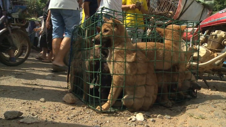 160620190322-dog-meat-festival-china-orig-00013313-exlarge-169